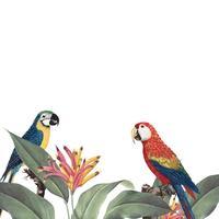 Macaw tropische gebladerte mockup illustratie