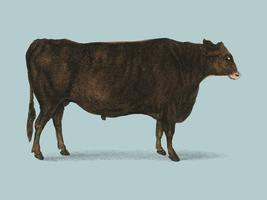 Animated Nature (1855), a portrait of an ox. Digitally enhanced by rawpixel.
