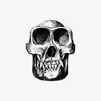 Crâne dans le style vintage