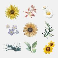 Blommor i blom