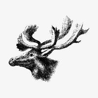 Dibujo de sombra de reno