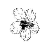 Icono de vector de naturaleza flor rosa dibujo chino sobre fondo blanco