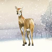 Female deer painted by watercolor vector