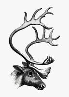 Deer shade drawing