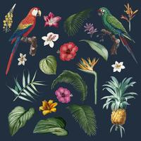 Macaw foliage illustration