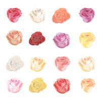 Ilustración de dibujo flores color de rosa