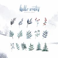 Hello Winter plants and flowers painted by watercolor vector