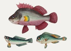 Kinesisk målning av en rosa fisk och två gröna fiskar.