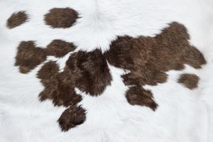Peau de vache blanche sur fond marron