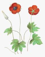 Flor de anémona en estilo vintage.