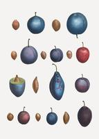 Various plum types