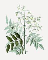 Japanischer Pagodenbaum
