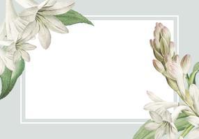 Tarjeta enmarcada tuberosa blanca