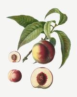 Árbol frutal de durazno