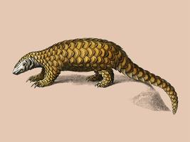 Indian Pangolin (Manis crassicaudata) illustrated by Charles Dessalines D' Orbigny (1806-1876). Digitally enhanced from our own 1892 edition of Dictionnaire Universel D'histoire Naturelle.