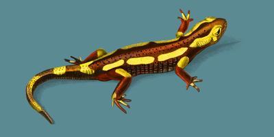 Brand Salamander (Salamandra Salamandra) illustrerad av Charles Dessalines D 'Orbigny (1806-1876). Digitalförstärkt från vår egen 1892-upplaga av Dictionnaire Universel D'histoire Naturelle.