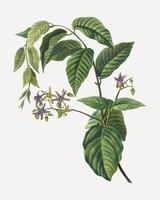 Silkvine branch