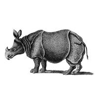 Vintage illustrations of Single-horned Rhinoceros