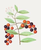 Bird cherry in vintage style