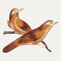 Pintura china con pájaros de China.