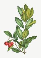 Rama de un árbol de fresa