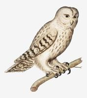 Tawny owl in vintage style