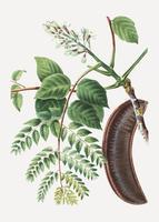 Árbol de café en grano