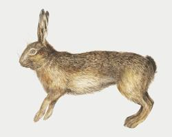 Hare in vintage style