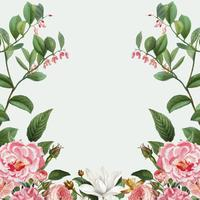 Cornice rosa peonia