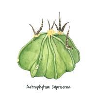 Hand getrokken Astrophytum capricorne geit hoorn cactus
