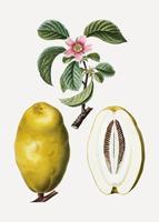 Membrillo frutas y flores