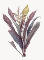 Planta morada