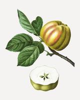 Manzana en una rama