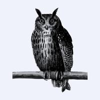 Long eared owl in vintage style