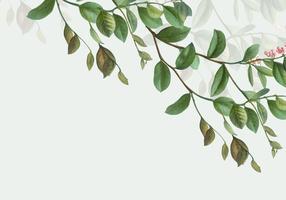 Marco botanico verde