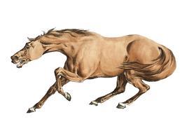 Ilustración del caballo marrón claro de Sporting Sketches (1817-1818) de Henry Alken (1784-1851). Mejorado digitalmente por rawpixel.
