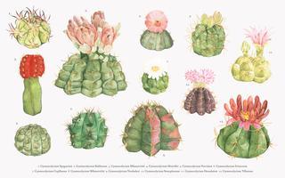 Mão desenhada gymnocalycium chin cactus coleção