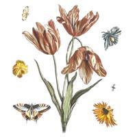 Vintage illustratie van bloemen, vlinders en een vlieg