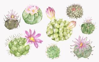 Divers mammillaria cactus dessinés à la main