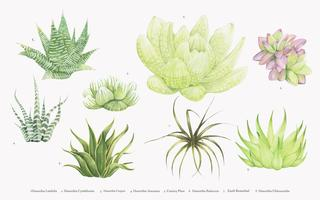 Collezione di piante di haworthia disegnate a mano