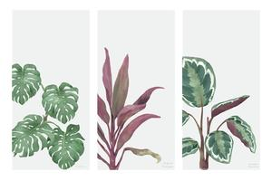 Collection de plantes dessinées à la main isolé sur fond blanc
