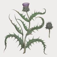 Fleur d'artichaut dans un style vintage