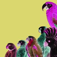 Papegojor gränsram