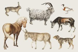 Rural livestock animals