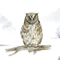 Eule im Winter-Aquarellartvektor