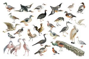 Illustration vintage d'une variété d'espèces d'oiseaux