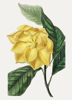 Candele Magnolia
