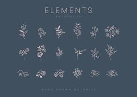 Set med handdragen botaniska element vektor