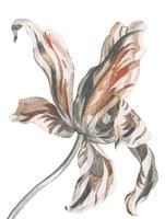 Vintage illustratie van een tulp