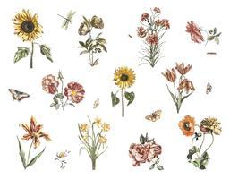 Ilustração Vintage de várias flores